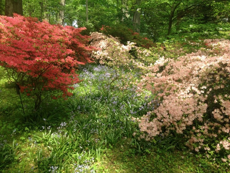 Garden Tour of Winterthur Estate - Rose Tree Place in Media, PA